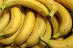 Several bananas with slightly freckled skins