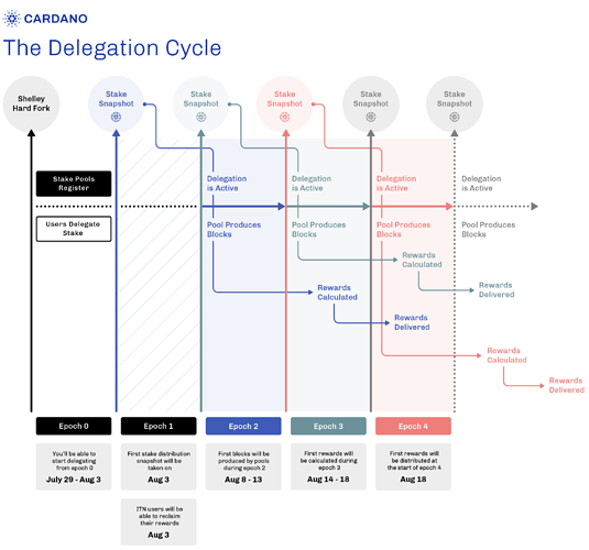 Graph showcasing the delegation cycle on the Cardano network